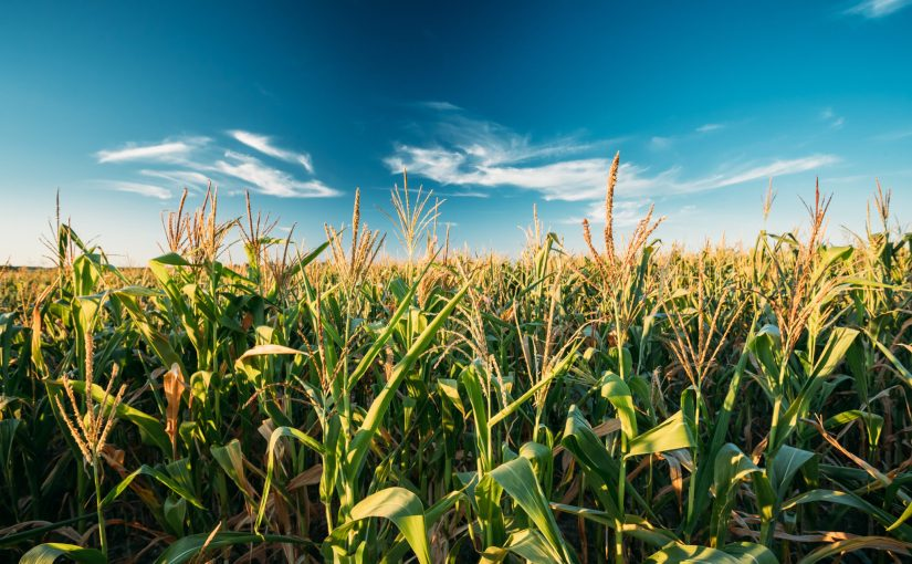 US Ethanol Makers Buy Brazilian Corn