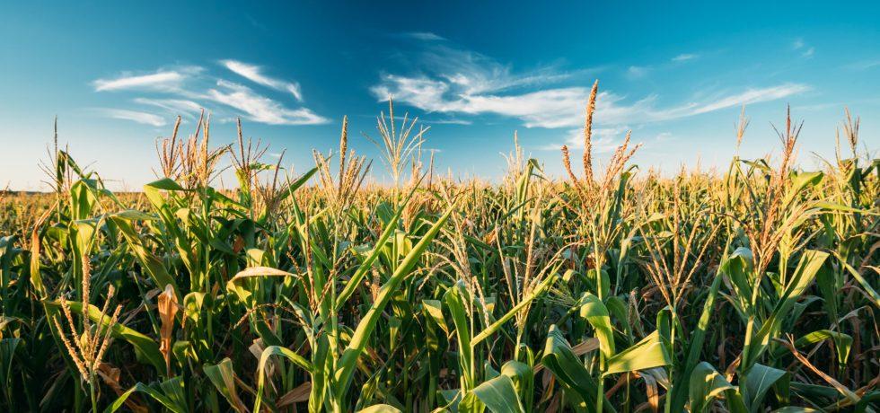 us ethanol brazil corn