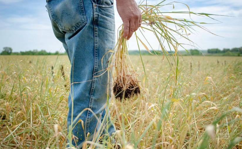 Biofuel Plan Faces Fresh Backlash From USAgriculture
